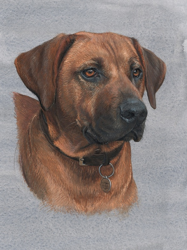 Dog portrait commissions in Gloucestershire UK by Fourlegs.co.uk