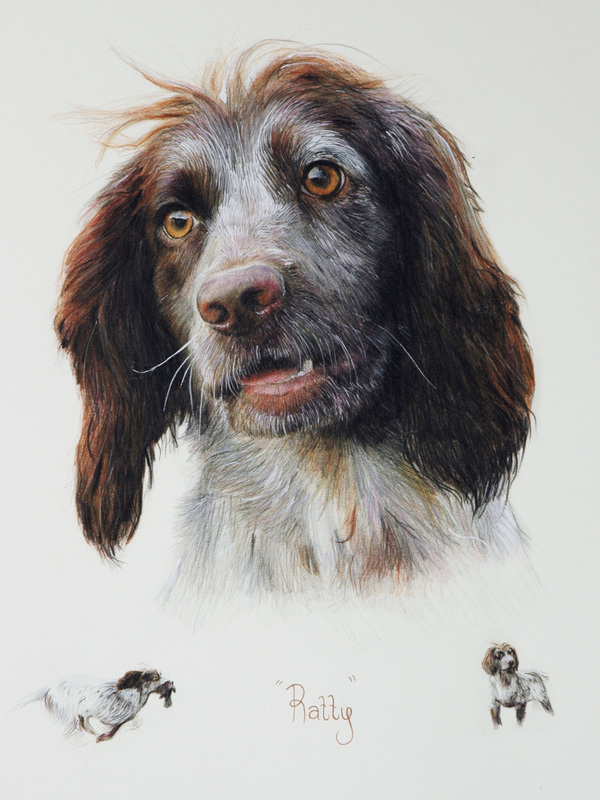 Field Spaniel dog painting portrait painting commissions in Gloucestershire by Fourlegs.co.uk