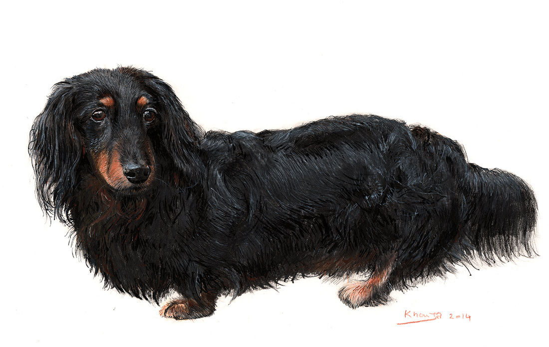 Dachshund dog portrait painting commissions in Gloucestershire by Fourlegs.co.uk