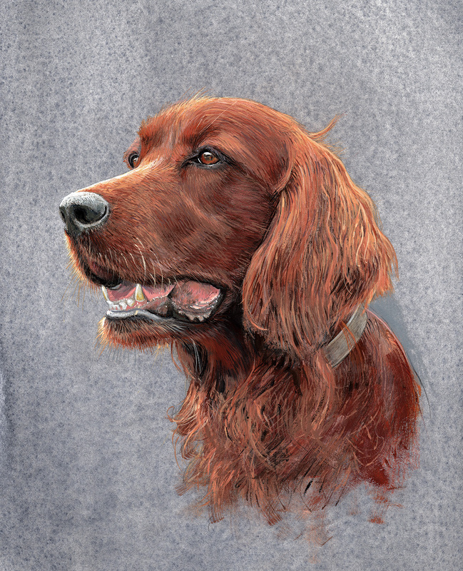 Red Setter |Pet portrait commissions in Gloucestershire by Fourlegs.co.uk