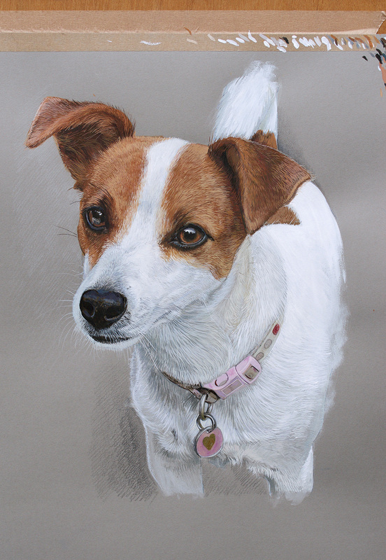 Jack Russell dog portrait commissions in Gloucestershire UK by Fourlegs.co.uk
